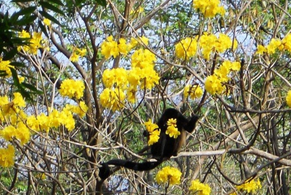 Pura Jungla Nature Reserve and Sustainable Community